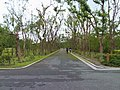 原生樹木園區 Nanao Native Trees Park - panoramio.jpg