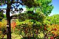 平岡樹芸センター (Hiraoka arboriculture center) - panoramio (1).jpg