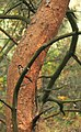 - panoramio - zibi entomo.jpg