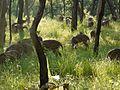 ... spotted deer (6367824393).jpg