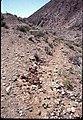 008 Grand Canyon Burro Damage 1975 (4951577179).jpg