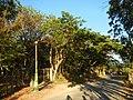 0581jfLandscapes Mabalas Diliman Salapungan Paddy fields San Rafael Bulacan Roadsfvf 08.JPG