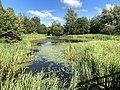 1285.Groningen.Grijpskerk.Nam.GasOpslag.Natuur.Park.NatuurPark.Natuurgebied.Kommerzeil.Planten.jpg