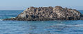 17-Mile Drive Bird Rock 01 2013.jpg