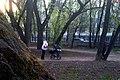 170520111789 Усадьба Расторгуева Л.И.- Харитонова, парк, ограда сада.jpg