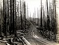 1937. Coates logging road. Tillamook Burn, OR. (34829797512).jpg