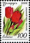2008. Stamp of Belarus 11-2008-06-10-tulpan.jpg