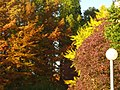 2011-10-28-141846 49,418805, 8,674650.JPG - panoramio.jpg