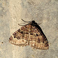 2011-12-25 15-03-03-papillon-4f.jpg