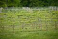 20110504-RD-LSC-0462 - Flickr - USDAgov.jpg