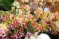 2013 Melbourne International Flower and Garden Show (8588918386) (2).jpg