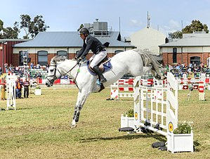 Royal Melbourne Show - Equestrian Competition.