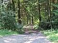 2017-07-28 Wanderung rund um den Haltgraben in Frankenfels (015).jpg