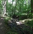 20180522155DR Dohna Naturschutzgebiet Spargrund.jpg