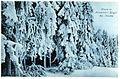 21355-Oberbärenburg-1919-im Winter-Brück & Sohn Kunstverlag.jpg