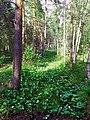2157. St. Petersburg. Sosnovka Park.jpg