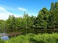 2166. Lake Sobach'e in the park Sosnovka.jpg