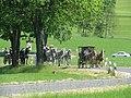 21te Rammenauer Schlossrundfahrt der Pferdegespanne (081).jpg