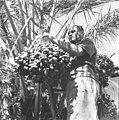 25 שנה לדגניה ב - מטע התמרים-ZKlugerPhotos-00132q0-907170685138423.jpg