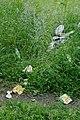 27 июня 2011 года. Невская Дубровка. Мусор (помои, остатки еды, посуды) в парке рядом с забегаловкой-шалманом. - panoramio.jpg