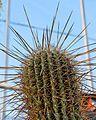 2855 cactus.jpg
