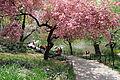 3036-Central Park-The Pond.JPG