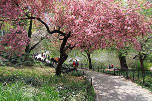 3036-Central Park-The Pond