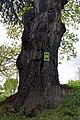 46-230-5011 Veryn Oak RB 18.jpg