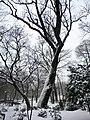 6. Bucuresti, Romania. Parcul Cismigiu in ultima zi de iarna 2018.jpg
