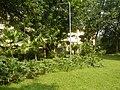 71Mehan Garden Ermita Manila Universidad de Manila 30.jpg
