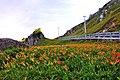 983, Taiwan, 花蓮縣富里鄉新興村 - panoramio (33).jpg