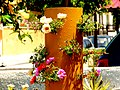 A@a My garden Larnaca Cyprus - panoramio (1).jpg