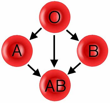 English: Donation pathway for ABO blood groups.