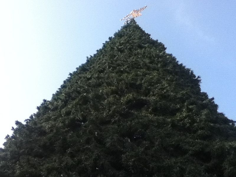 File:A Tall Christmas Tree! 2013-11-23 23-01.jpg