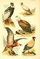 A book of birds (Plate IX) (6021708067).jpg