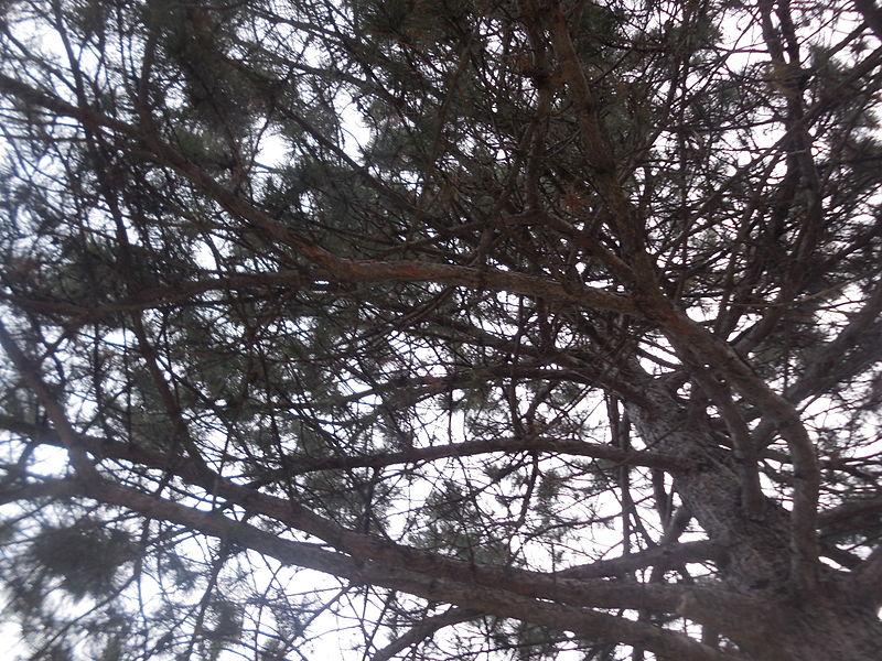 A summer tree.JPG