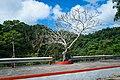 A tree along the sidewalk of Quezon National Park.jpg