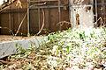 Abandoned Green House 6 (5772740284).jpg