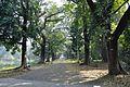 Acharya Jagadish Chandra Bose Indian Botanic Garden - Howrah 2011-01-08 9827.JPG