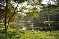 Acharya Jagadish Chandra Bose Indian Botanic Garden - Howrah 2011-01-08 9831.JPG