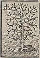 Acosta - 1624 - Historie naturael en morael - UB Radboud Uni Nijmegen - 109862082 326.jpeg
