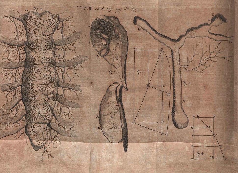 Acta Eruditorum - III medicina, 1691 – BEIC 13350590