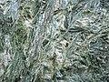 Actinolite xenolith (Sandor Dike, Neoarchean, 2.703 Ga; Route 17 roadcut northeast of Wasp Lake & north of Wawa, Ontario, Canada) 6 (48342600186).jpg