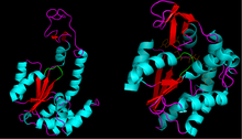 Adenylate kinase 2.png