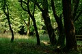 Afternoon in the Wood (42705537802).jpg