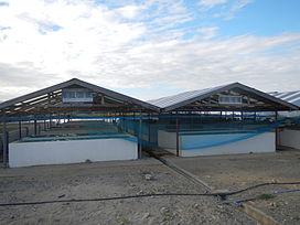 Budi Daya Ikan Wikipedia Bahasa Indonesia Ensiklopedia Bebas