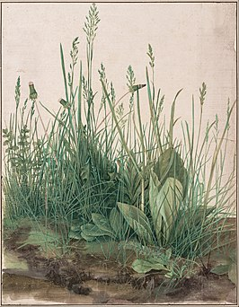 Albrecht Dürer - The Large Piece of Turf, 1503 - Google Art Project.jpg