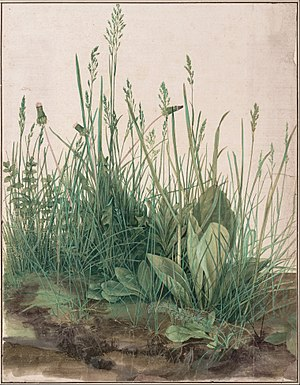 1503 in art - Image: Albrecht Dürer The Large Piece of Turf, 1503 Google Art Project