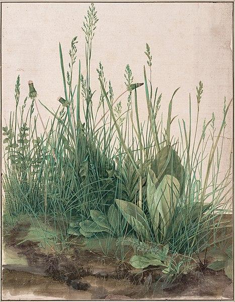 Plik:Albrecht Dürer - The Large Piece of Turf, 1503 - Google Art Project.jpg
