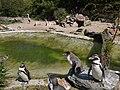 Alpen a-d Rijn - Avifauna - pingwiny - panoramio.jpg